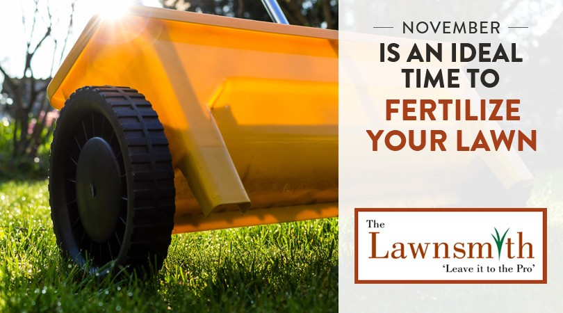 November Is A Great Time To Fertilize Your Lawn
